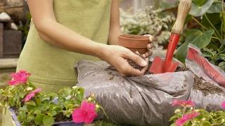 Цветы растут, как на ДРОЖЖАХ/Подкормка комнатных растений(, 2017-02-08T11:35:18.000Z)