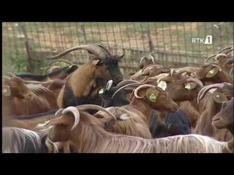 Baixar ''Një ditë me dhitë e kecat e Nesretit'' - Bubavec- Malishevë - Dokumentar