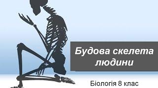 Будова скелета людини