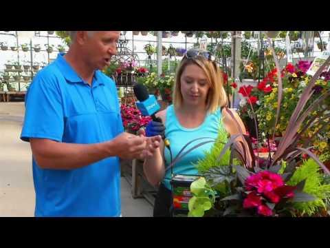 Dutch Growers - Spring Gardening Tips