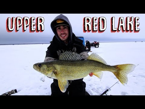 Early Ice Walleye On Upper Red Lake 🔥 (GIANT)