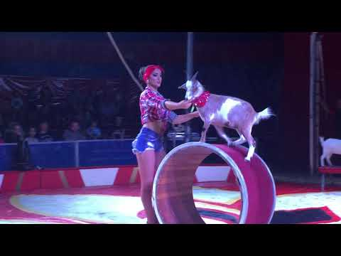 Royal Hanneford Circus Goat and Dog tricks at Altamont Fair 8/16/19