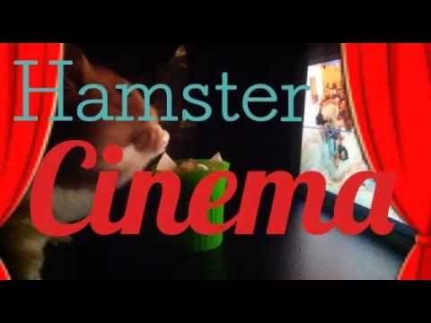 Tiny hamster cinema! 🎬
