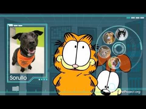 Garfield & The Shelter Pet Project - 30 second spot