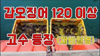 [갑프로]  좌대 갑오징어 낚시 고수가 사용하는 갑오징어 채비 궁금하죠 클릭 - 추천