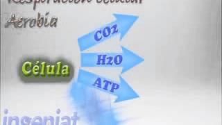 SEC 1ERO C1 B3 22 Comparación entre respiración aerobia y anaeróbia