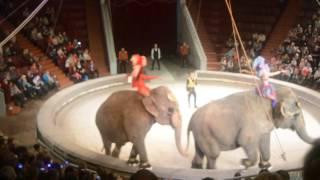 Шоу слонов великанов! кемеровский цирк!