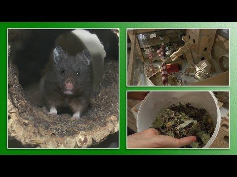7 Regeln zur Hamsterhaltung - TierheimTV informiert