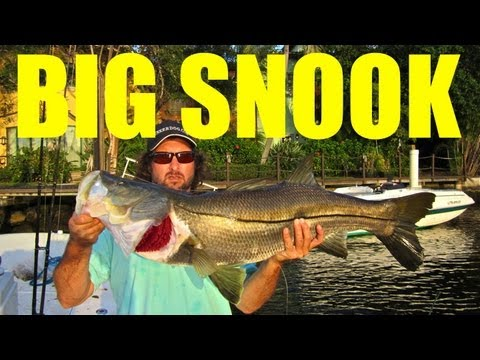 MONSTER SNOOK FISHING - Feature Episode