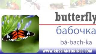 Russian vocabulary: Insects(Learn Russian for free with http://www.russianforfree.com. Do you want to learn useful Russian words? Then watch our vocabulary videos. Now we're going to ..., 2012-04-08T19:40:36.000Z)