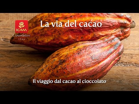 La via del cacao