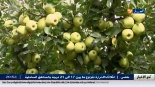 عبد المجيد تبون يؤكد أن الجزائر لن تتراجع عن قرار منع إستيراد التفاح الفرنسا