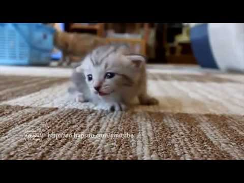Baby Kittens Compilation