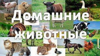 Домашние животные. Развивающие видео для детей от года. Часть #1.