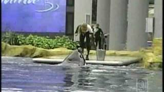 NH Family Shares Video Of Deadly Sea World Show