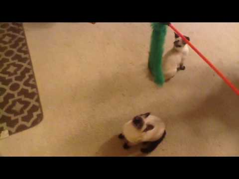 Cats playing with new toy