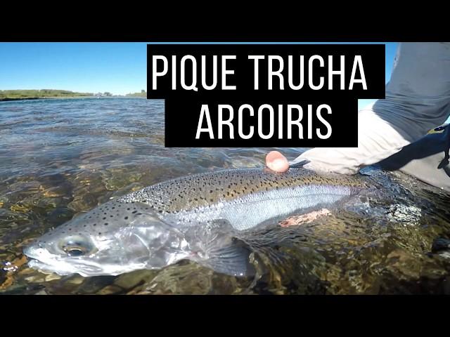 PIQUE TRUCHA ARCOIRIS