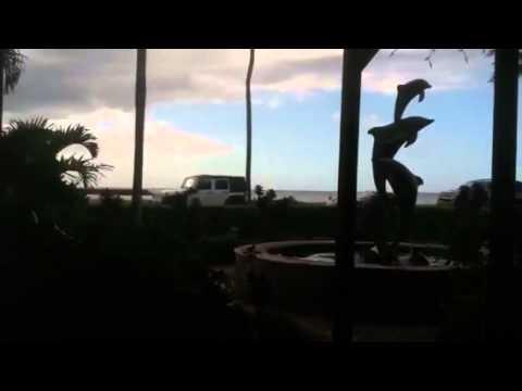Horrific Hawaiian Tragedy