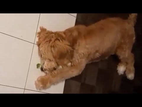 Pup tries broccoli for the first time, has hilarious reaction