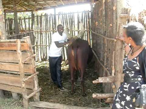Rwandan Culture. Cecile Kayirebwa en visite au Musée Royal de Nyanza - 2011.