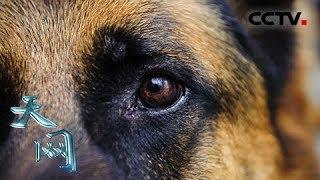 本期节目主要内容:功勋犬是指通过训练考核在任务中表现优良并因此获得...
