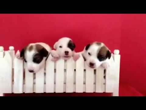 Puppies, first photo shoot