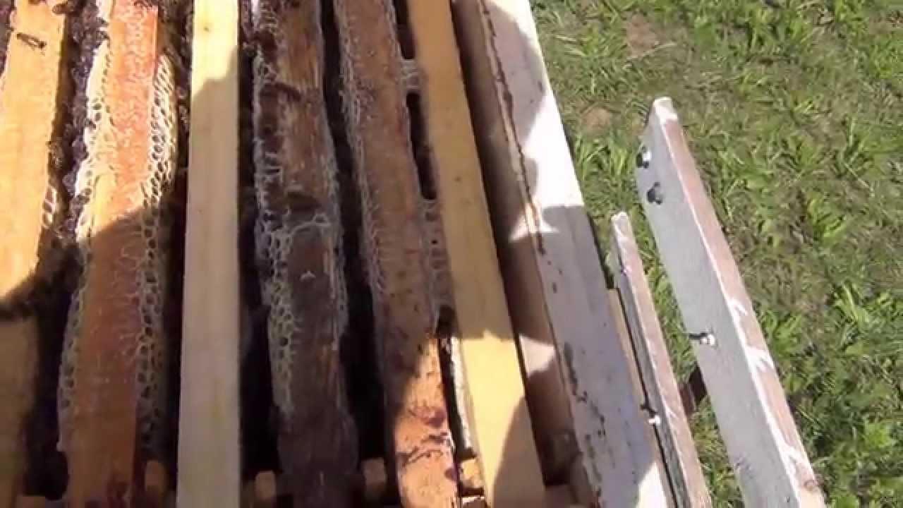 Видео Мед Осмотр