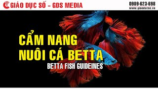 [STEM] Betta fish guidelines
