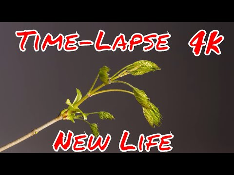 Plants Quickly Growing For a Minute | Time-Lapse