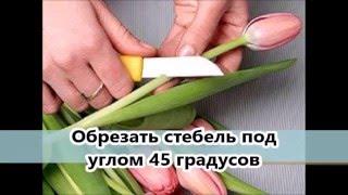 видео Как дольше сохранить букет цветов. Что делать, чтобы цветы долго стояли