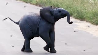 Adorable Baby Elephant Chases Birds