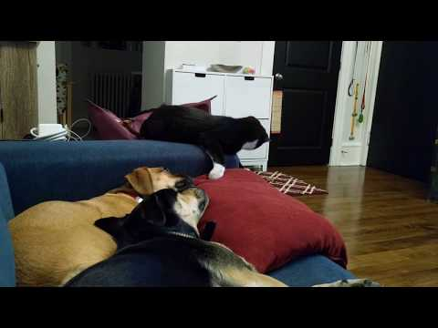 Kitten can't get puggle to play