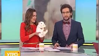 Особенности карликовых кроликов. Утро с Губернией. 15/02/2018. GuberniaTV