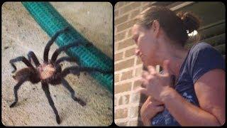Tarantula Nearly Scares Mom to Death