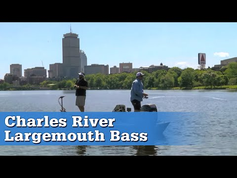 On The Water TV - Charles River Bass Season 13 Episode 3