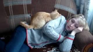 Наидобрейшая кошка лечит волшебной энергией
