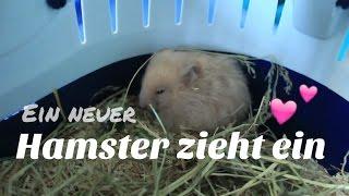 Ein Hamster zieht ein!😍 | HappyPets