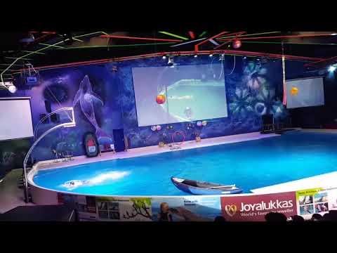 Dubai Dolphinarium 2017 | Dolphin Seal Magic illusion Show | Creek Park| V11- Jokers Show