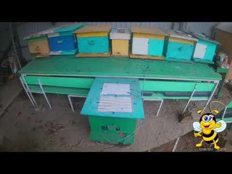 Автоматический обогрев пчелиных семей