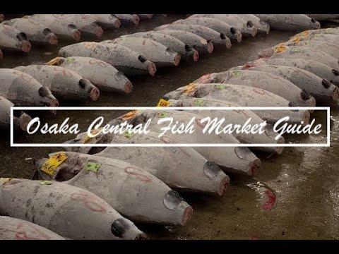 Osaka Central Fish Market Guide: Tuna Auction