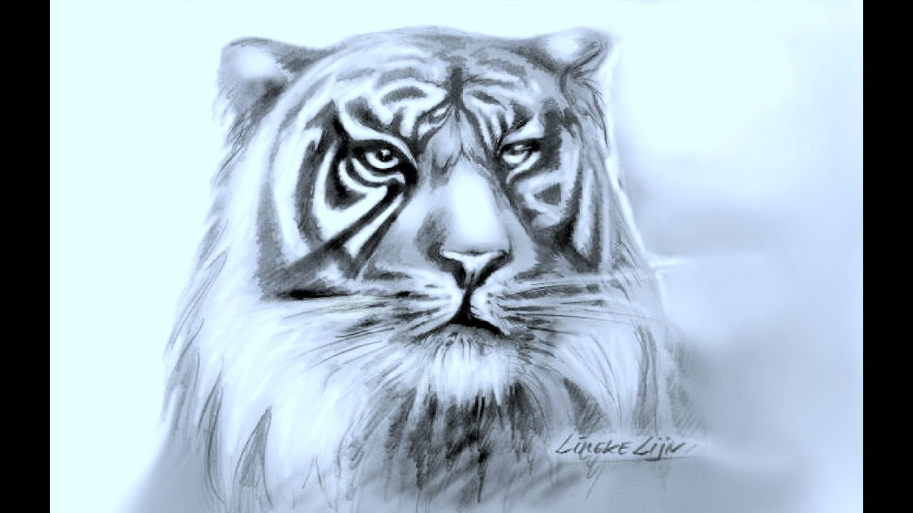 moeilijke kleurplaten tijger