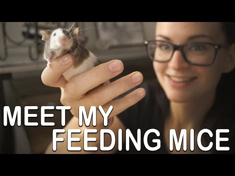 MEET MY FEEDING MICE (Cleaning And Caretaking)
