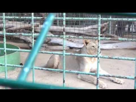 Sutara Arian at Dubai Zoo