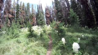 Beargrass in Montana