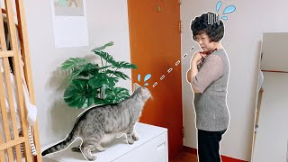 Korean Mom Who HATES CATS Meets Our Cat + Sees Our Seoul Apartment for the First Time!