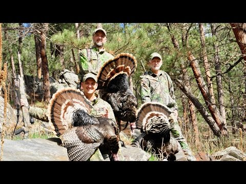 South Dakota Black Hills Turkey Hunt