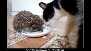 Ёжик и котик. Прикол как Ёжик с Масянькой делиться не стал. Ridiculous Video.