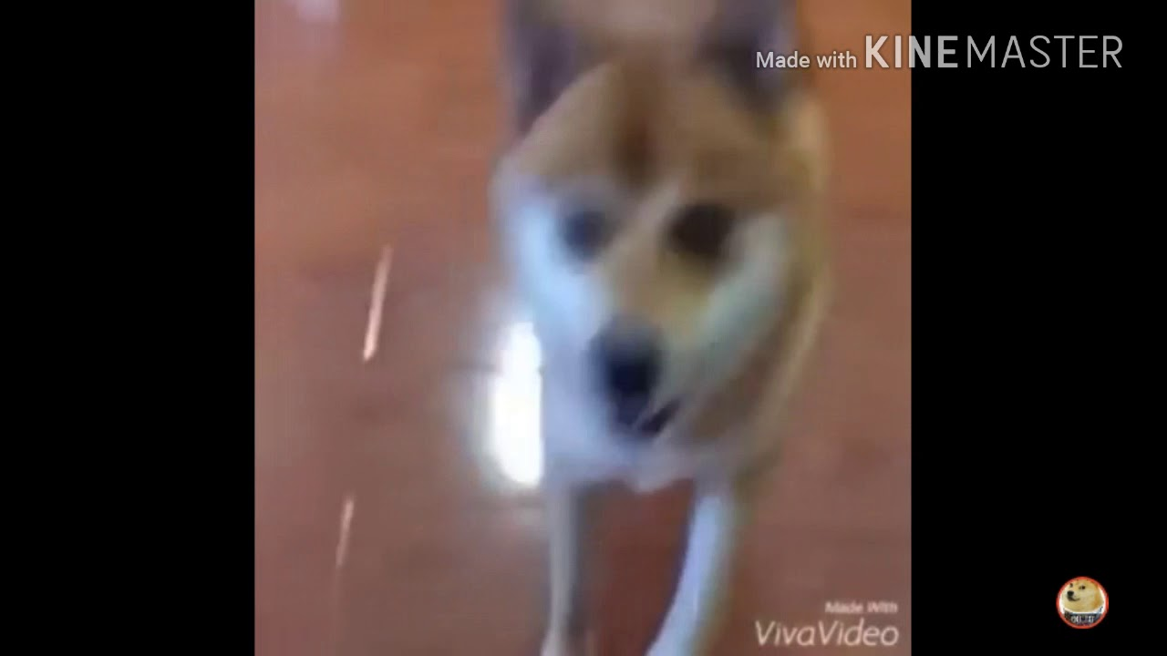 Crazy Dog Dancing To Meme Song - YouTube