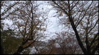新渡戸稲造 生誕150年記念 第2弾「未来につながる『道』~新渡戸稲造の武士道~」