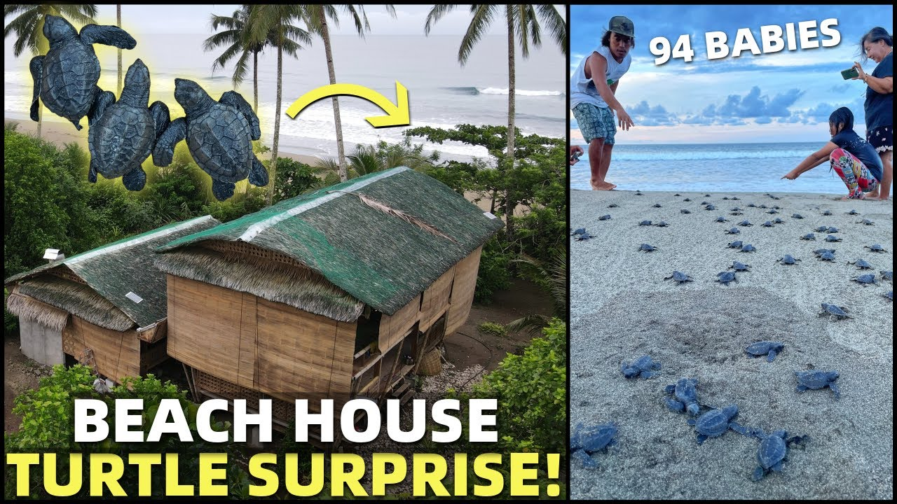 BIG BEACH HOUSE SURPRISE! Turtles Hatch In Front Of Philippines Land (Cateel, Davao)